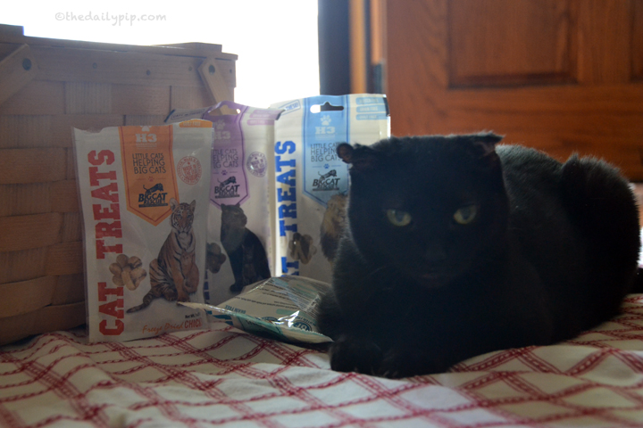 Little Cats Helping Big Cats treats raise awareness and funds for Big Cat Rescue