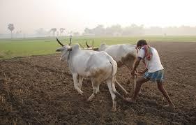 Fight on farm contour शेतीच्या बांदावरून हाणामाऱ्या