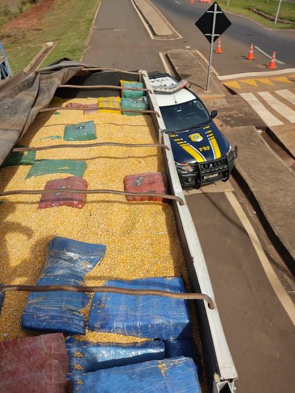 PRF apreende 13,8 toneladas de maconha sob carga de milho em Mundo Novo (MS)