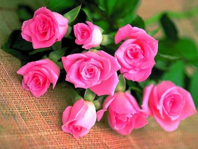 Toko bunga di semua dunia sudah datang guna mengeksploitasi gejala ini dan  menolong orang guna lebih dekat bareng melalui kemauan bunga pada perayaan a23f808fbd