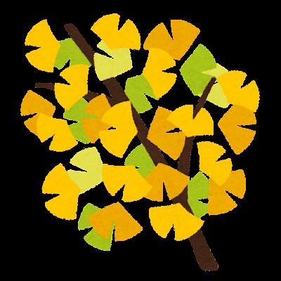 イチョウの枝のイラスト