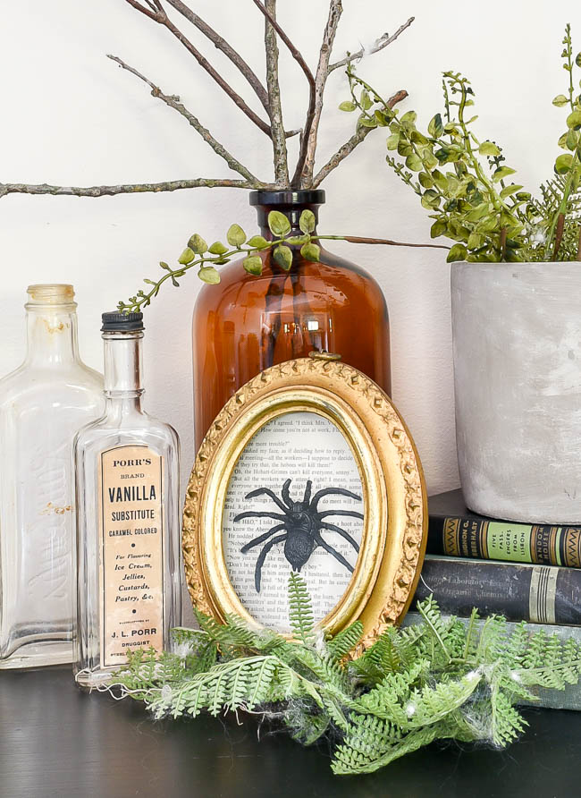 Vintage inspired DIY spider specimen art