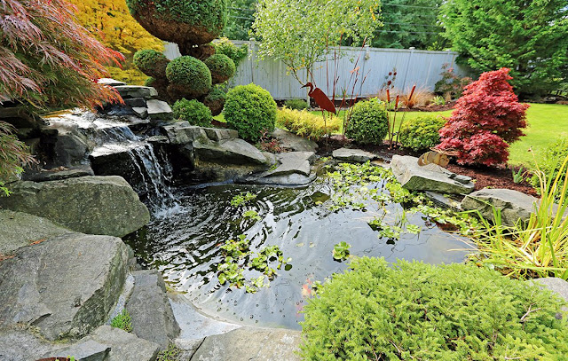 Create a Water Garden in Your Backyard