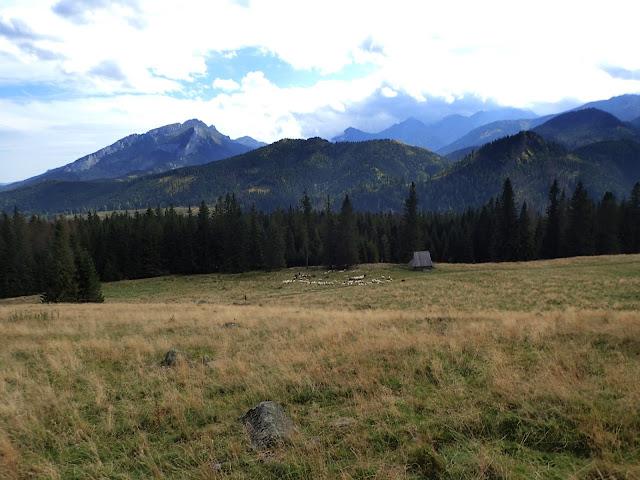 Wypas kulturowy na polanie + góry