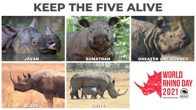 World Rhino Day - rhinos.org