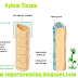 Functions of Xylem Tissue in Plants