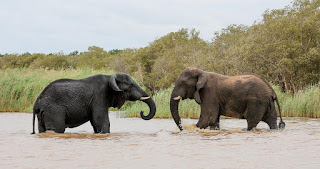 The story of the owners of the elephant