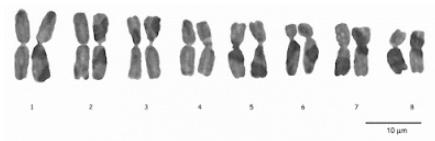 Formulasi yang benar untuk kromosom pada gambar adalah?