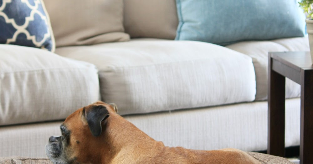Dog Beds That Look Like Furniture Brentwood Home Runyon Bed Tnr