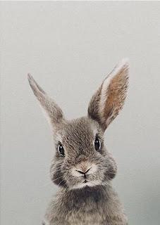 kelinci berkomunikasi melalui pendengaran