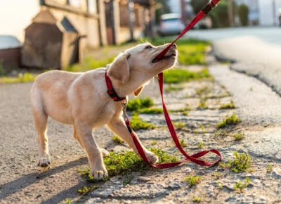 How To Stop My Dog From Chewing