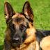 """Σκύλος """"ήρωας"""": Έσωσε τη ζωή του αφεντικού του μετά από εγκεφαλικό"""