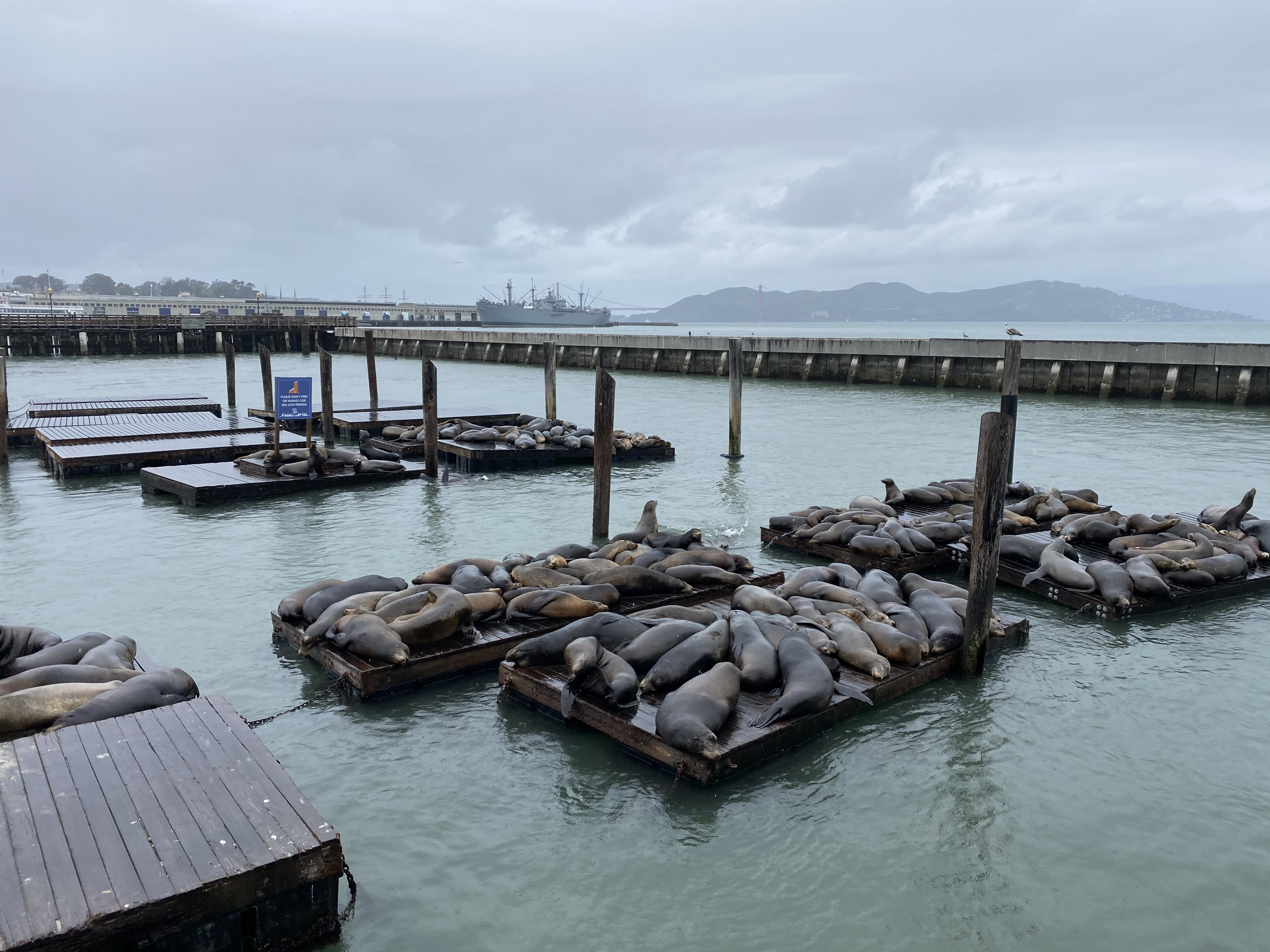 Sea Lions at Pier 39 in San Francisco | biblio-style.com