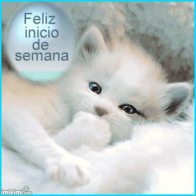 gatito Feliz inicio de semana