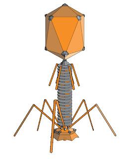 phage.jpg