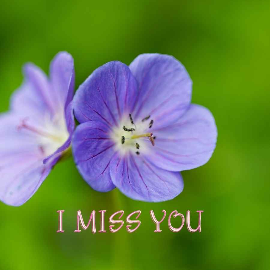 miss you images hd
