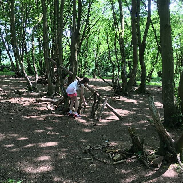 Sasha building dens in wood