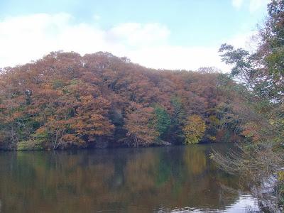 大阪府・府民の森〔緑の文化園〕むろいけ園地 室池