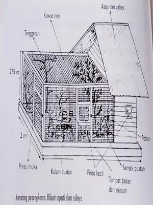 Gambar Sketsa Kandang Penangkaran Cucak Rowo