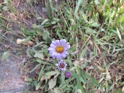 wildflower wednesday