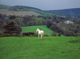 Horse at Irland Countryside