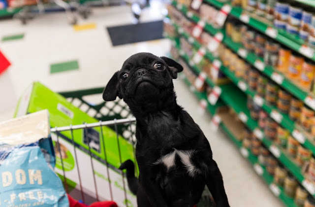 Animals And Pet Supplies