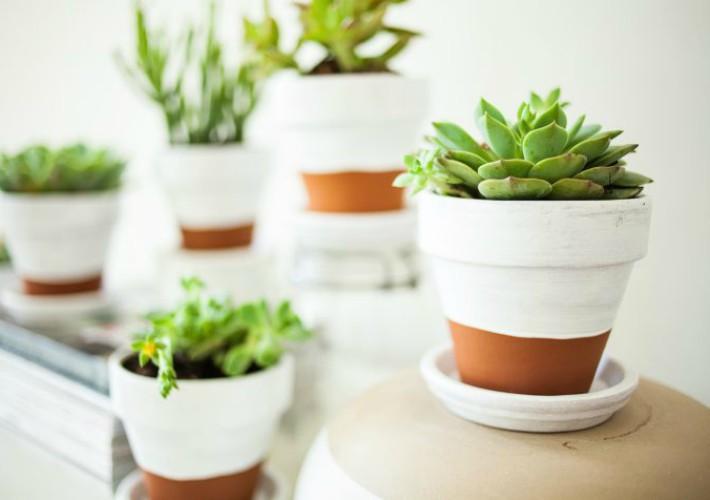 Cómo cuidar nuestras plantas de interior con frío intenso
