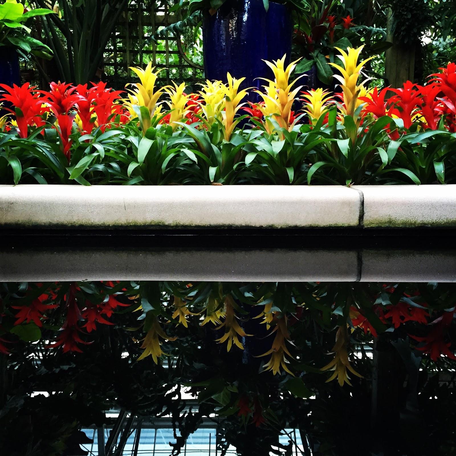 Atlanta Botanical Garden Skyline Gardens: Sridhar Peddisetty's Space: Atlanta Botanical Garden