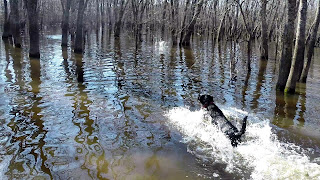north Texas Duck Hunting|North Texas Retriever Trainers|Retriever Training