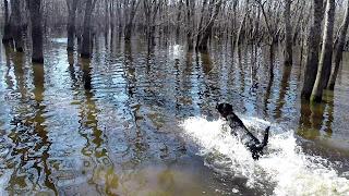 north Texas Duck Hunting|North Texas Retriever Trainers|Retriever Training