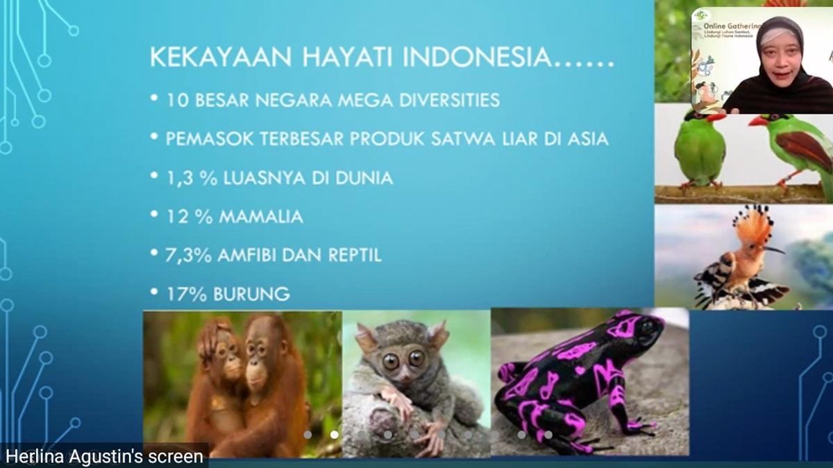 fakta kekayaan hayati di Indonesia