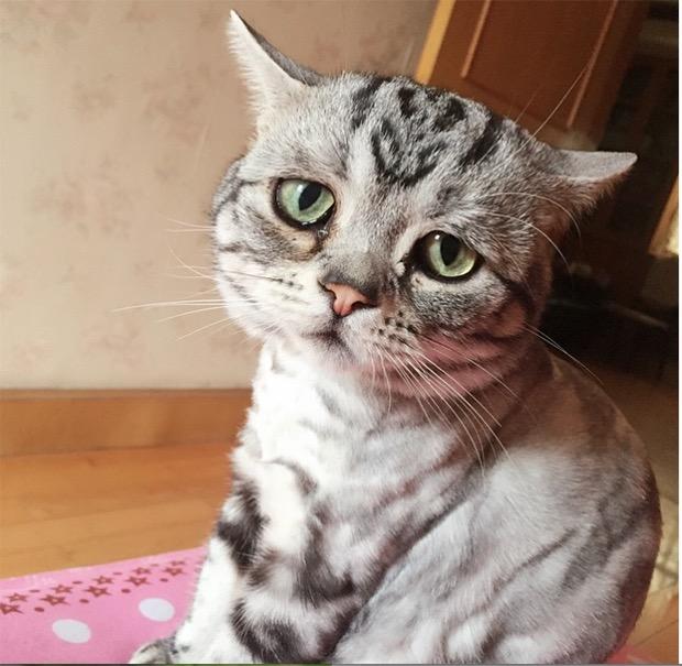 http://kongxie.blogspot.my/2017/06/kucing-yang-paling-sedih-dalam-dunia.html
