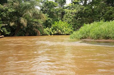 Canales de Tortuguero en Costa Rica