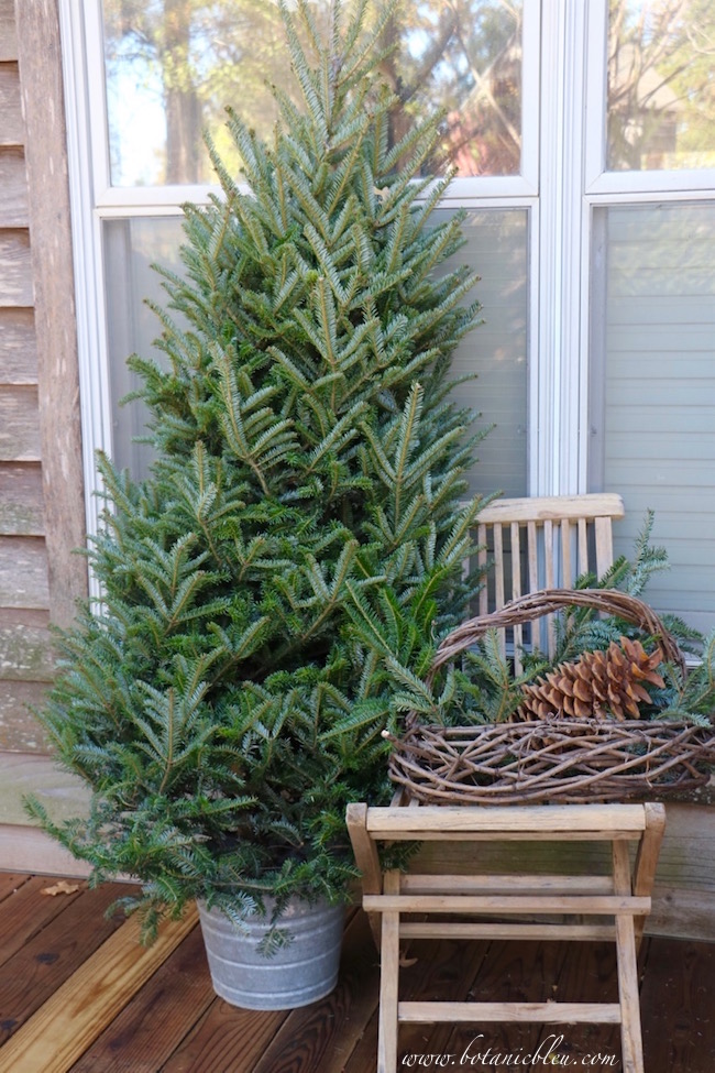 keep-live-trees-outside-until-decorating