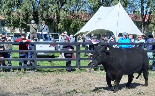 Suspenden día del toro
