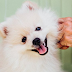 Getting Paid $100 Per Hour To Pet Dogs Is Possibly Our Favorite Dream Job
