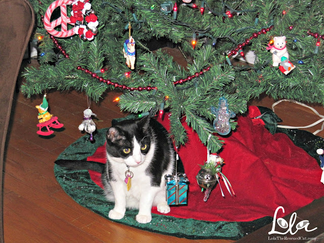 cat's christmas|cat under tree