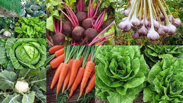 9 Εύκολης καλλιέργειας χειμερινά Λαχανικά για λαχανόκηπο ή γλάστρες