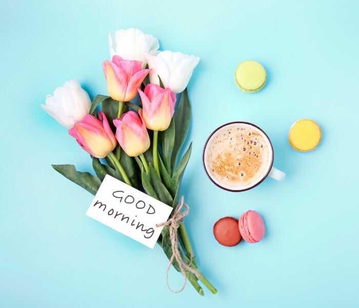 good morning pics
