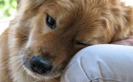 ΣΥΓΚΙΝΗΤΙΚΟ – 20 πράγματα που δεν πρέπει να ξεχνάμε όσοι αγαπάμε τα σκυλιά! Μαθήματα ζωής!