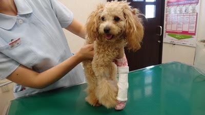 tipos de fraturas em cães