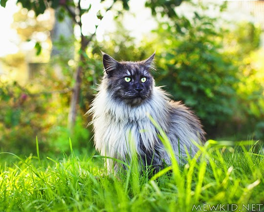 cat sitting in grass