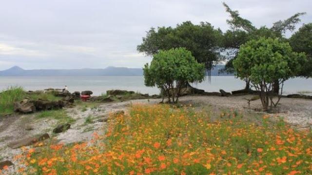 Indahnya Pantai Pasir Bertabur Bunga di Danau Toba