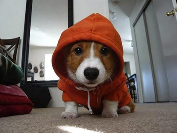 Hình Ảnh Những Chó Cún Đáng Yêu Nhất Hành Tinh