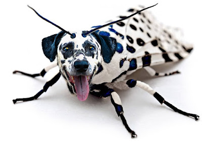 Dalmatian moth weird funny picture