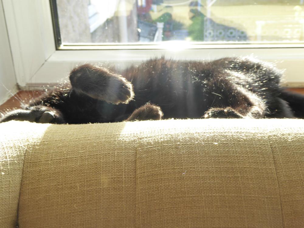 Black cat (Polly) sunbathing
