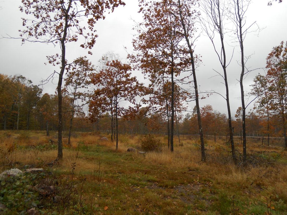 Piantagioni di querce
