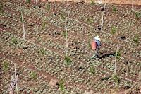 usaha pertanian, jenis usaha pertanian, bisnis pertanian, peluang usaha pertanian, bisnis pupuk, pupuk tanaman, pupuk, usaha pupuk, cocok tanam