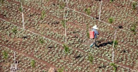 20 Jenis Usaha Pertanian Untung Banyak Modal Minim Buat Pemula Investasi Untung