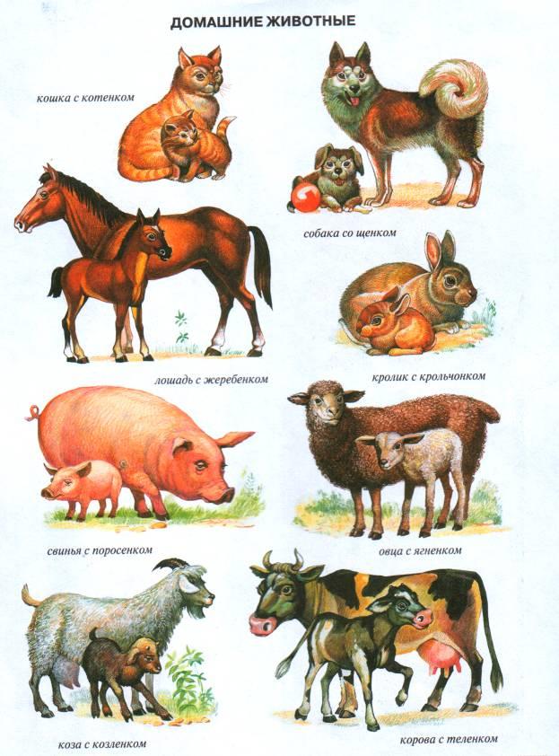 Картинки животные и их детеныши